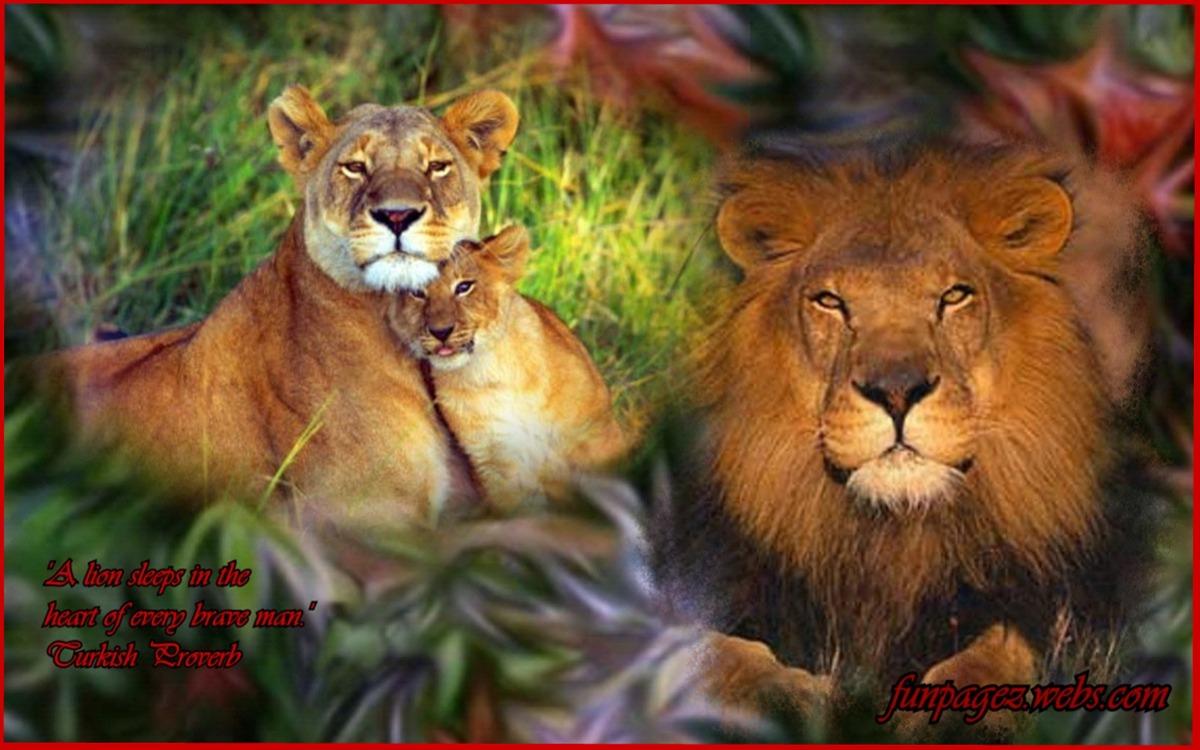The Animal King...