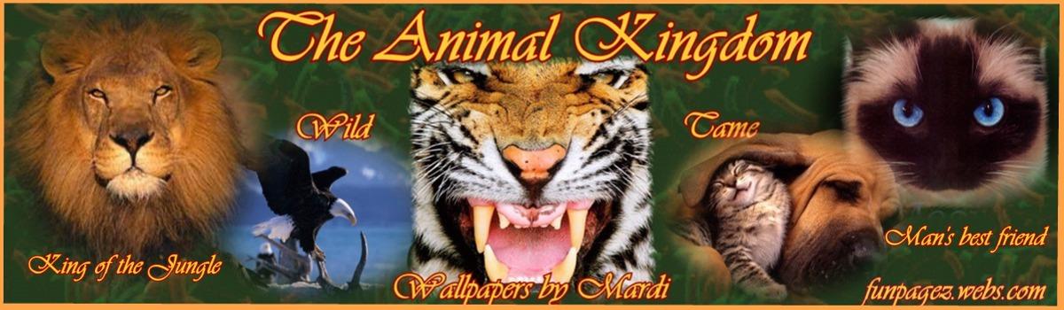 ... animals com...