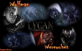 Wolfman #2