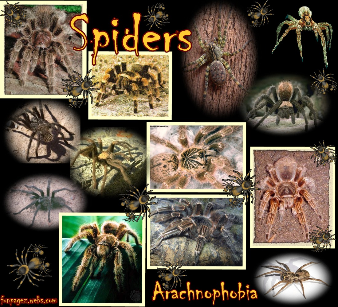 Creepy, hairy, spiders