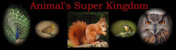 Animals Super Kingdom