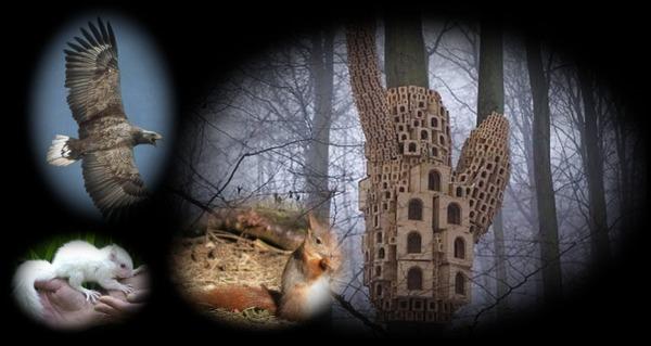 Animals Super Kingdom Also, visit Mardi's Funpagez...  click here