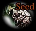 Redwood Seed