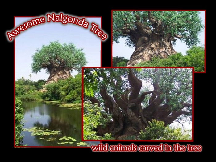Awesome Naglonda Tree